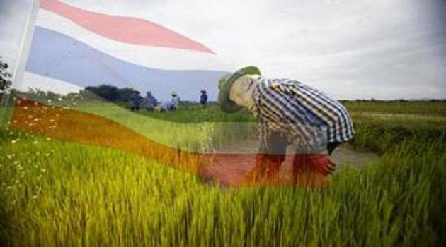 จีนผลักดันเกษตรกรสู่อีคอมเมิร์ซ