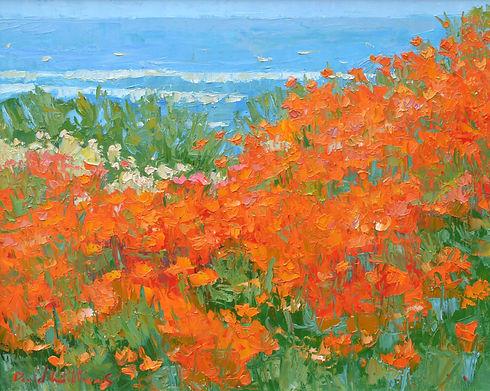 Williams-Seaside Poppy.jpeg