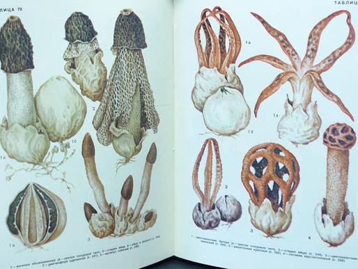 Mushrooms in the USSR