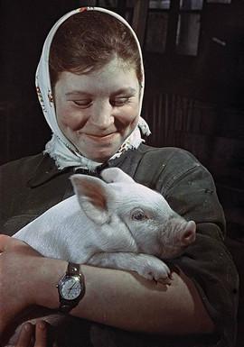 """Best pig breeder Maria Rogacheva with her pet"" Photo: by Yakov Ryumkin, USSR, 1960s"