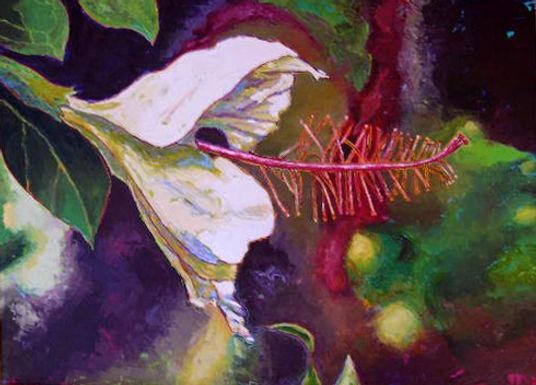Hibiscus by Terri Smith