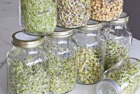 Mason jar sprouts.jpg