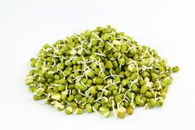 Bean_Mung_Sprouting__.jpg