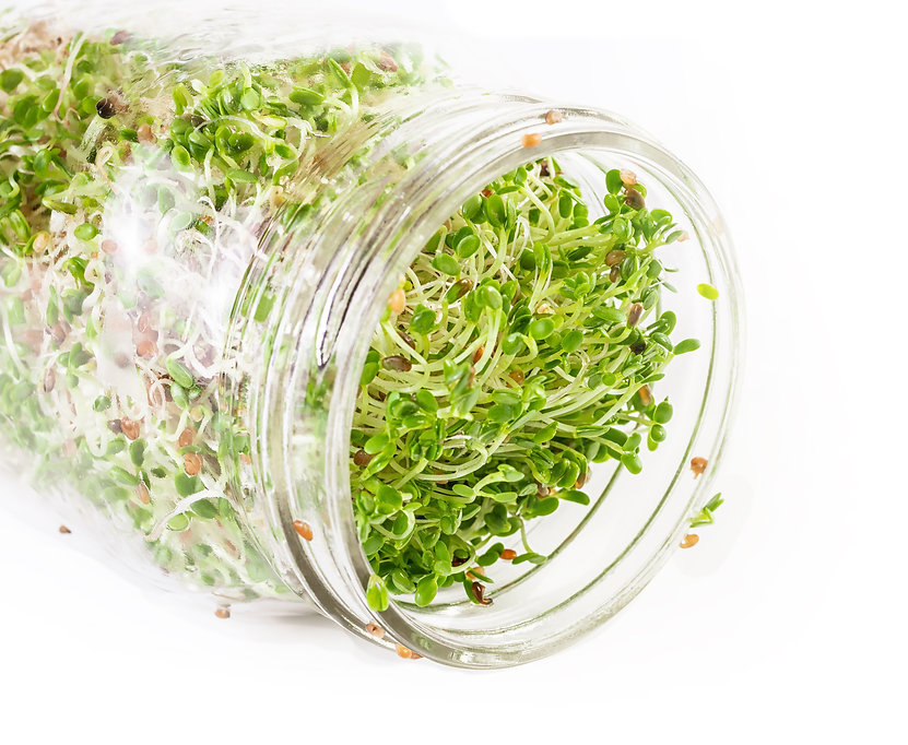 Open Jar of sprouting seeds.jpeg