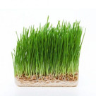 Organic Wheatgrass.jpg