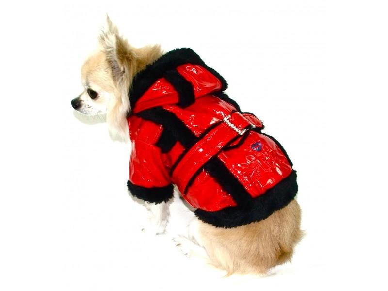 Regency Red Dog Rain Coat