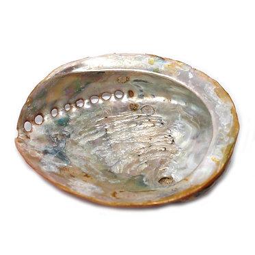 shell soap dish stand natural