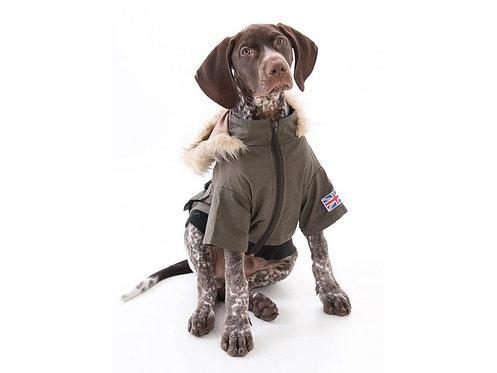 dog army coat