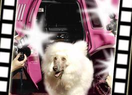 DOG-WALK CAT-WALK