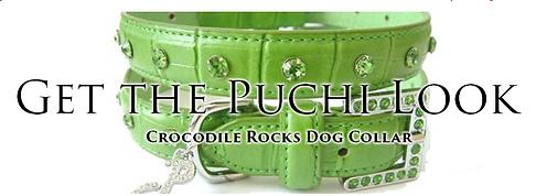 super cool dog collars