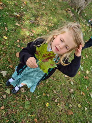 Collecting leaves and more