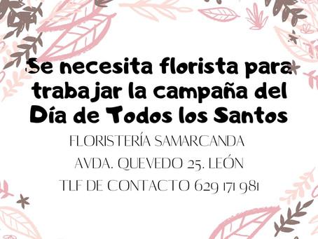 OFERTA: Se necesita florista para trabajar la campaña del Día de Todos los Santos.