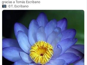 Hoy os compartimos esta publicación del Real Jardín Botánico.