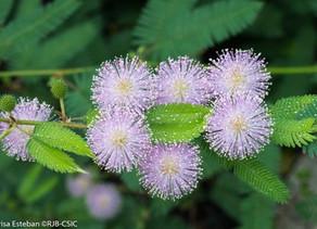 Bellezas florales con aroma a septiembre