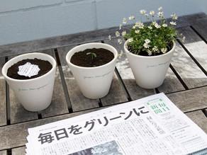 """""""El periódico japonés que puedes plantar, después de leerlo."""""""