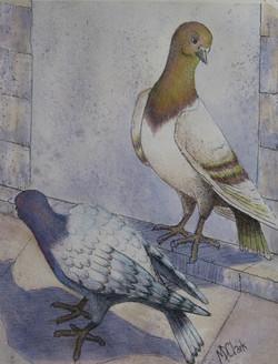 Pretty Pigeons #1