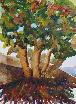 The Myth Tree