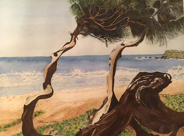 Windswept Beach Tree-Kauaii