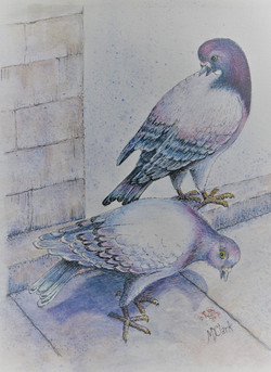 Pretty Pigeons #2