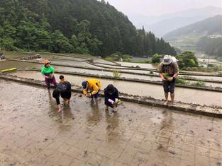医療人やトレーナーがお米作りをスタート!