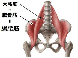 体幹について(腸腰筋)