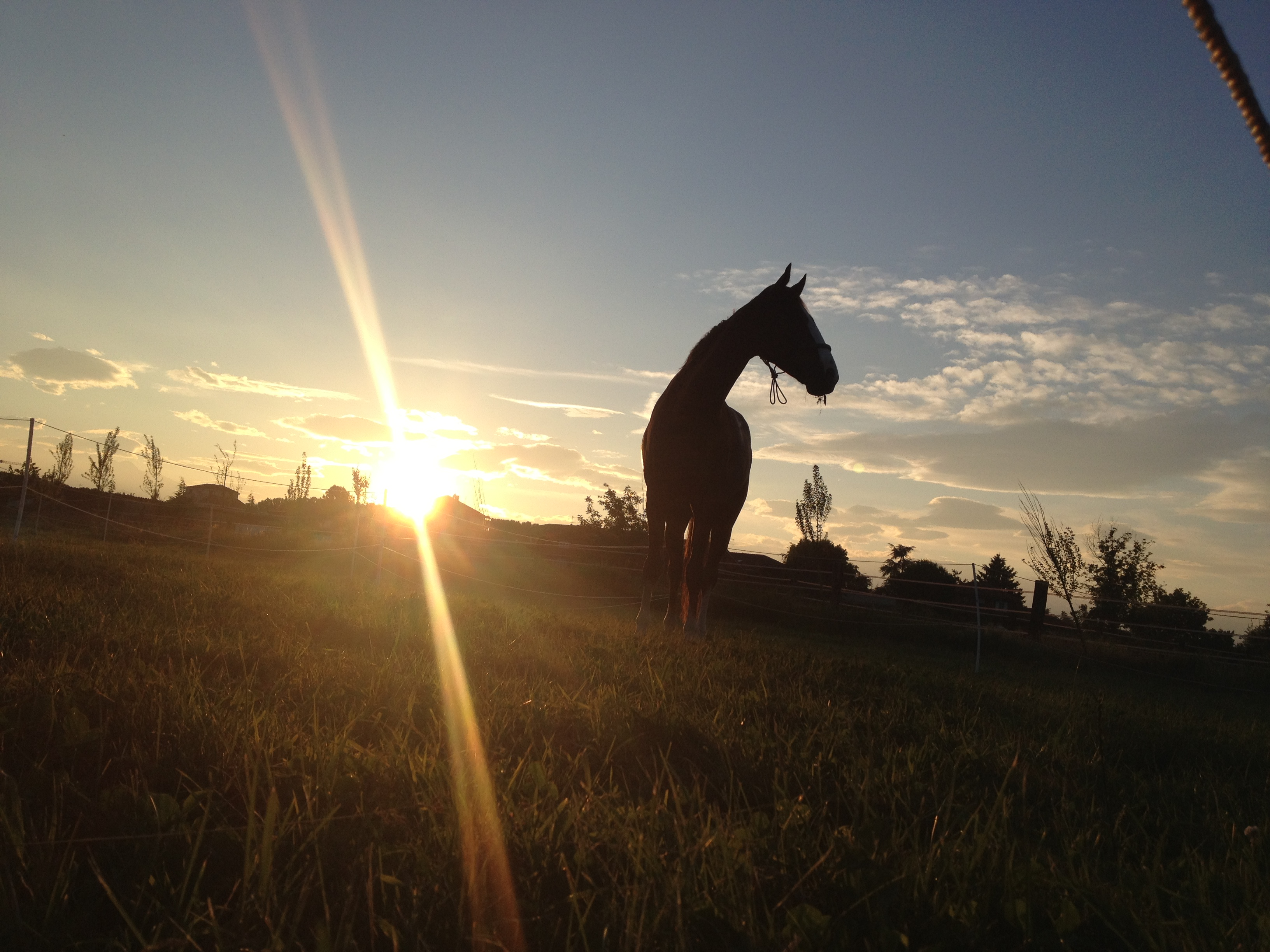 Marnet equestrian