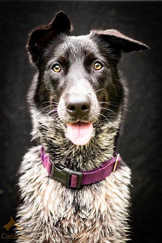 Dog Training Darwin