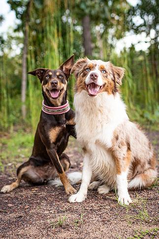 Dog Trainer Darwin