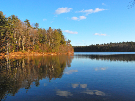 Henry David Thoreau's Walden in Review