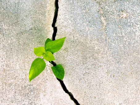 The Brainwork of Resilience  (Part Two)
