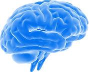 brain copy.jpg