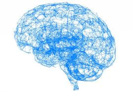 How Does Our Intelligence Change Throughout Our Lifespan?