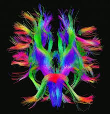 Your Brain on Stress
