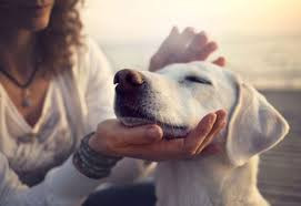 Why We Love Our Dogs!