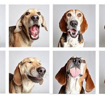 Do you speak DOG?