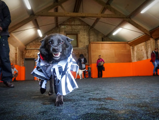 Howloween Social Play at K9 Anytime Dog Training School