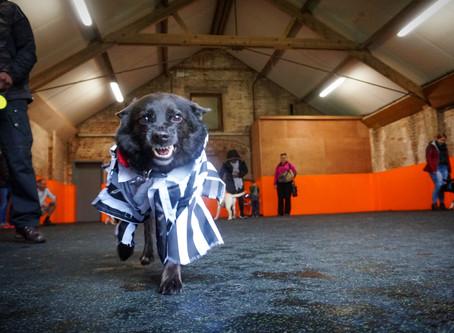 Howloween Social Play at K9 Anytime Dog Training School
