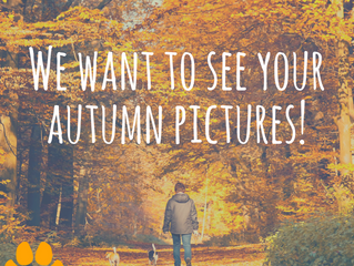 Send us your Autumn Dog Walk Pictures!