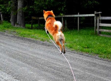 LEVEL UP your dog walks