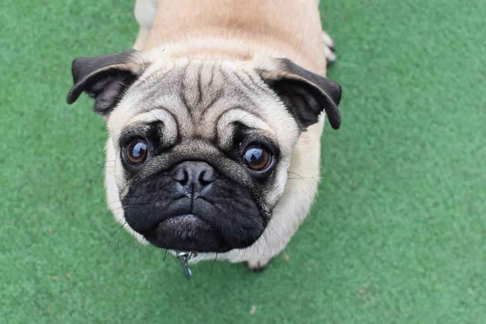 luxury dog boarding dog daycare