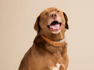 Your Dog's Collar