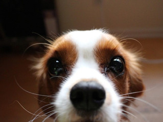 Your Dog's Whiskers