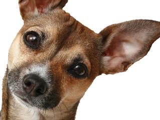 Why isn't my dog training working?