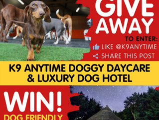 Dog Friendly Holiday GIVEAWAY!