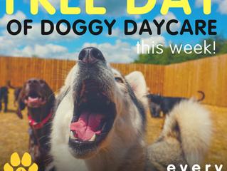WIN FREE DOGGY DAYCARE!