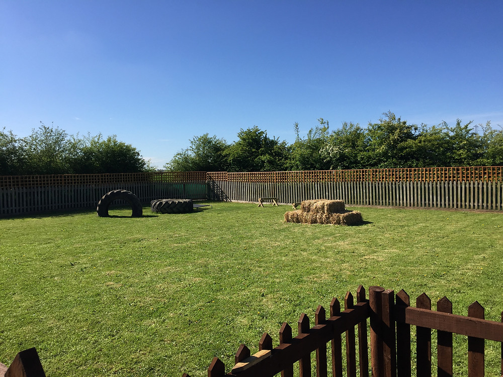 dog boarding dog daycare Shropshire