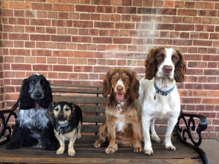 K9 Anytime Doggy Daycare