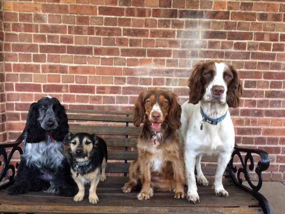 dog boarding daycare Wolverhampton
