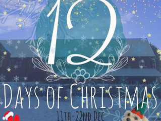 12 Days of K9 Anytime Christmas!