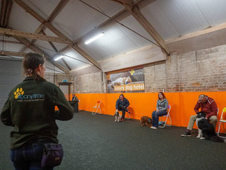 Upcoming Classes at K9 Anytime Dog Training School